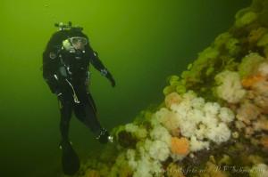 Leder Dan Kåre Engebretsen svever over korallrevet i Mossesundet